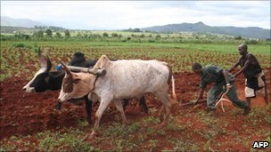 Military recruits being trained in farming as part of a programme to improve Madagascar's food security