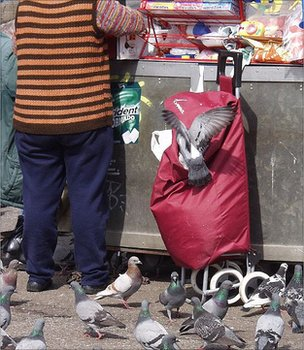 Pigeons in Barcelona, Spain (Image: BBC)