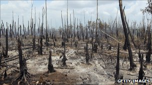 Burned trees are seen after a wildfire moved across part of a forest in Florida