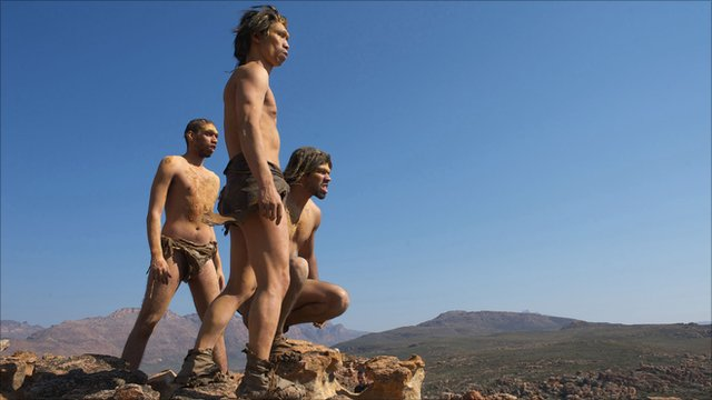 The first human species to walk fully upright, Homo erectus