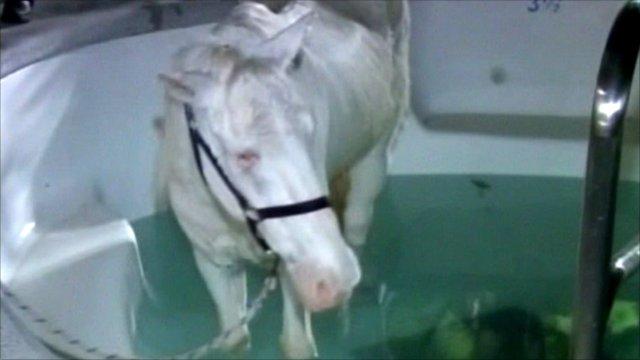 Caspar the horse