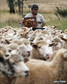 A farmer herds sheep at the Charlie Bragg farm in Cootamundra,135 km (83 miles) northwest of Canberra in this March 10, 2011 file photo