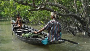 Boat in the Sundarbans