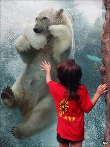 Girl and polar bear in a zoo