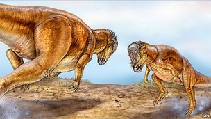 Head butting pachycephalosaurs (SPL)