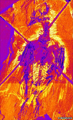 "False colour image of the pigment ""map"" of Confuciusornis sanctus, the earliest known beaked bird (Image: Roy Wogelius, University of Manchester)"