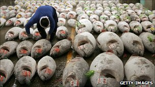 Rows of dead tuna (Credit: Getty Images)
