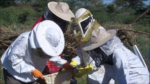 Farmers collecting honey (c) Lucy King
