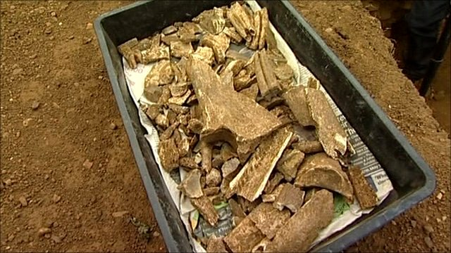Human bones found by Leicester school students at dig