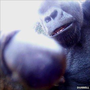 Ya Kwanza inspecting the camera