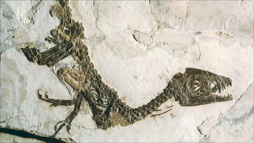 Scipionyx samniticus dinosaur fossil