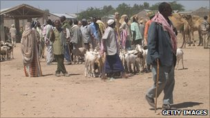 A group of people with their livestock in Somaliland