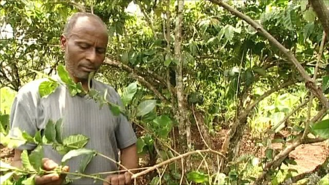 Coffee farmer Feleke Dukamo