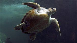 A turtle underwater