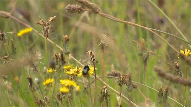 Bee in wild meadow