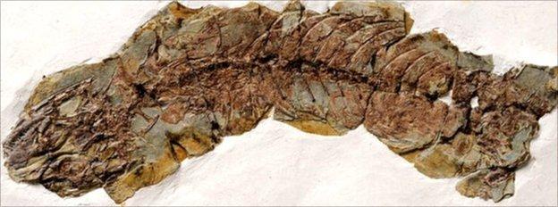 Half of the pregnant Yabeinosaurus (Image: Yuan Wang/IVPP)