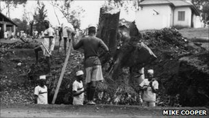 Convicts in a Kenya road choppping down a tree