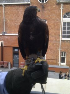 Hawk at Swindon library