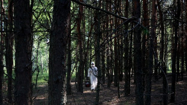 Scientist in the Red Forest, in the Chernobyl exclusion zone