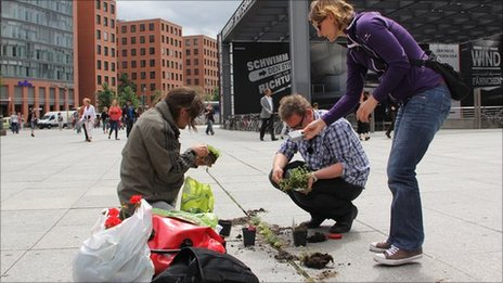 Guerrilla gardening in central Berlin