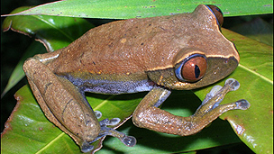 Tanzanian toad