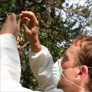 Researcher Andrea Bonisoli-Alquati releases a wood warbler from a mist net in the Chernobyl exclusion zone