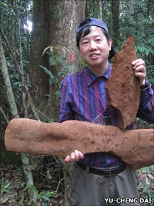 Prof Yu-Chen Dai holds two, relatively small, fragments of the single giant fungus