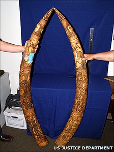 Two smuggled ivory tusks, in a photo provided by the US attorney for the Eastern District of New York