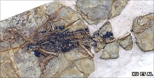 Skeleton of Xiaotingia zhengi