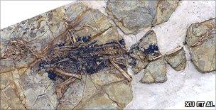 Skeleton of Xiaotingia zhengi