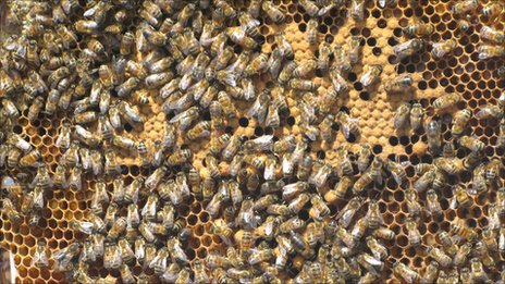 Bee hive in London