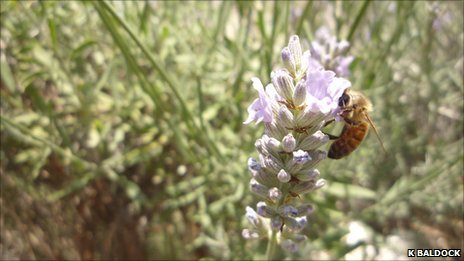 Bee (K Baldock)