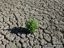 A plant tries to grow in cracked dry land