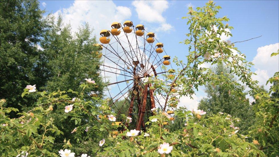 32 Tahun Berlalu, Begini Kondisi Alam di Zona Radioaktif Chernobyl