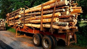 Trailer stacked with logs