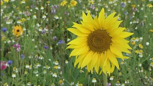 The Field of Dreams contains 57 different species of annual flowering plants