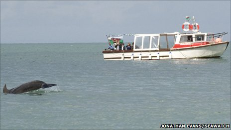 Dolphin and boat Photo: Jonathan Evans