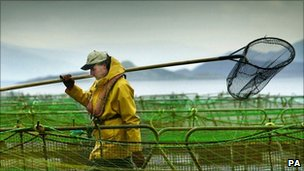 Worker at a fish farm