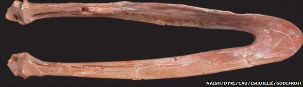 Lower jaw of S. nessovi (Naish/Dyke/Cau/Escuillié/Godefroit)