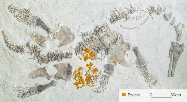 Polycotylus latippinus (Credit: NHM/LA)
