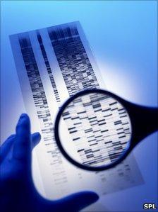 DNA autoradiogram
