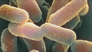 E. coli