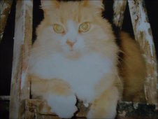 Val's cat Sandy in his 'healthier days'.