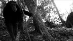 Chimpanzees in Uganda (c) TEAM Network