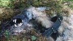 Dead wolf (Credit: Per Ahlqvist)