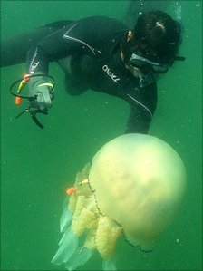Tagging a jellyfish