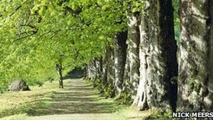 A view along the Lime Tree Walk at The Argory, County Armagh, Northern Ireland. (Copyright: Nick Meers)