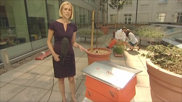 BBC London's Sonja Jessup with a beehive in Holborn