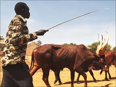 Man with his cattle in Juba