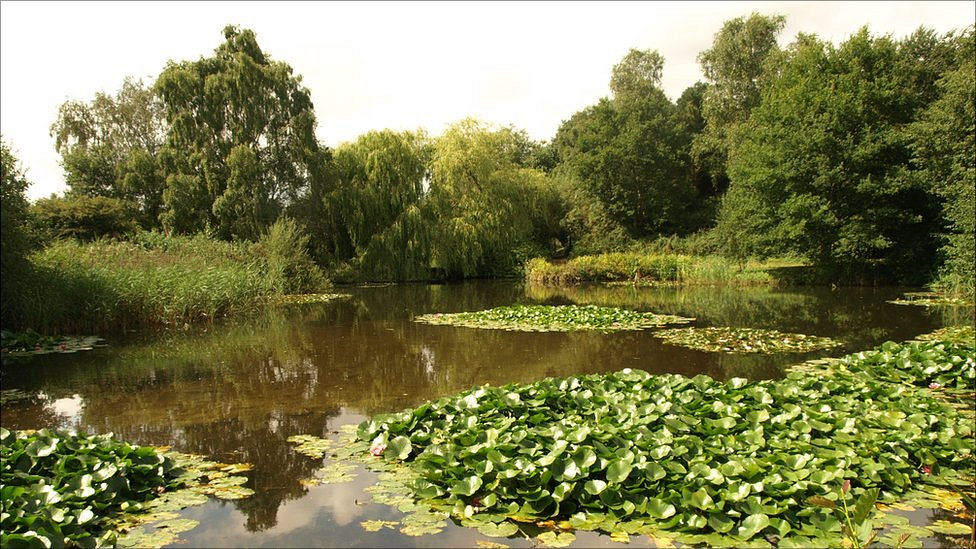 Bbc news in pictures pensthorpe garden opens after redesign for Redesign your garden